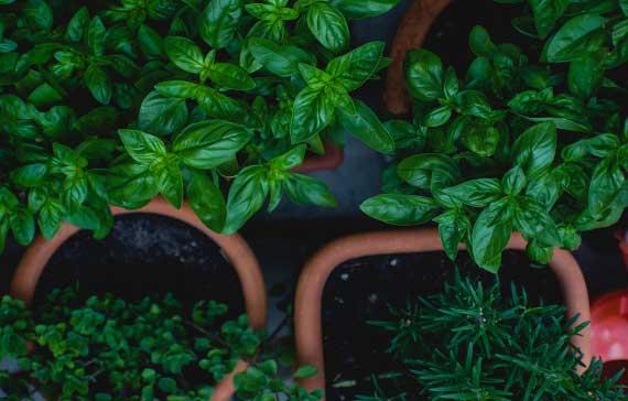 ayurveda herbs treatment